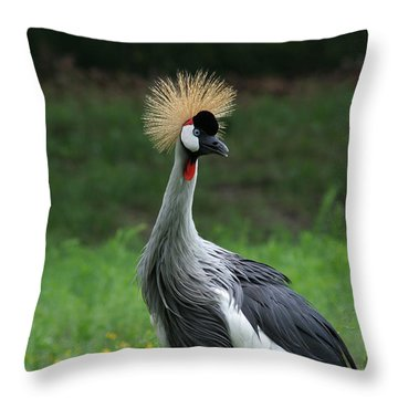 African Crowned Crane #3 Throw Pillow