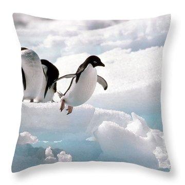 Adelie Penguins Throw Pillow