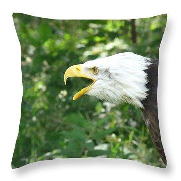 Throw Pillow featuring the photograph Adler Raptor Bald Eagle Bird Of Prey Bird by Paul Fearn