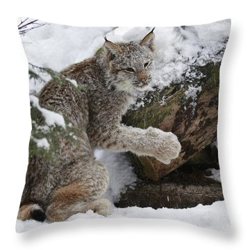 Adorable Baby Lynx In A Snowy Forest Throw Pillow by Inspired Nature Photography Fine Art Photography