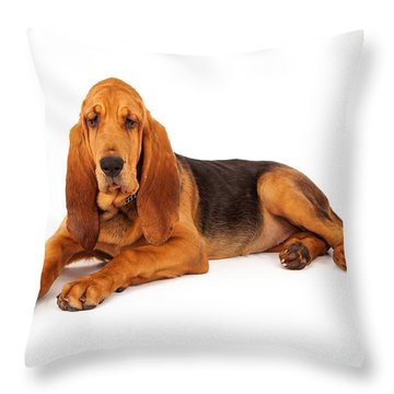 Adorable Large Bloodhound Puppy Throw Pillow