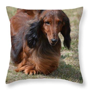 Adorable Long Haired Daschund Dog Throw Pillow by DejaVu Designs