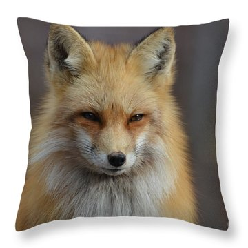Adorable Red Fox Throw Pillow