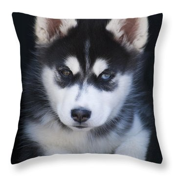 Adorable Siberian Husky Sled Dog Puppy Throw Pillow