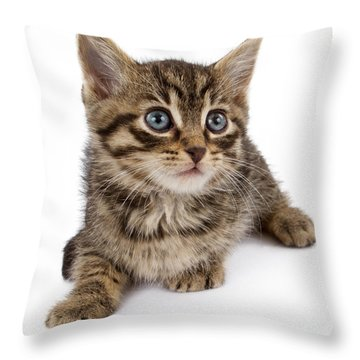 Tan Cat Throw Pillows