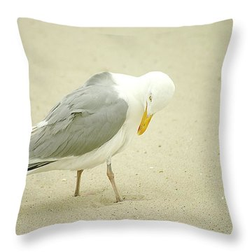 Throw Pillow featuring the photograph Adult Seagull Preening by Suzanne Powers