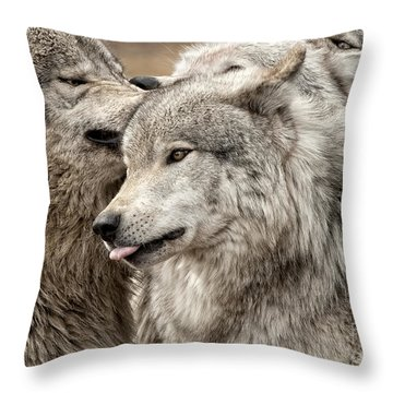 Adult Timber Wolf Throw Pillow