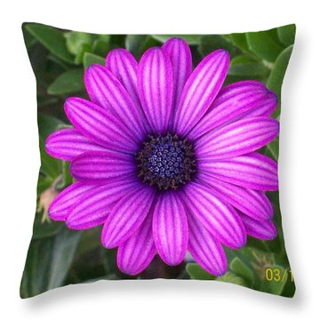 African Beauty Throw Pillow by Belinda Lee