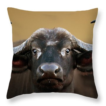 African Buffalo Cow Portrait Throw Pillow