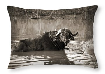 Water Buffalo Throw Pillows
