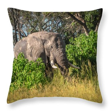 African Bush Elephant Throw Pillow