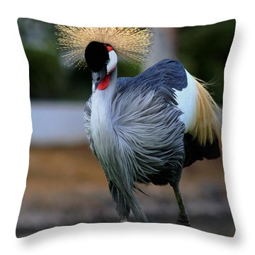 African Crowned Crane Running Throw Pillow
