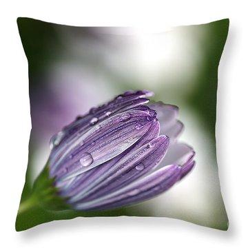 African Daisy Throw Pillow by Joy Watson