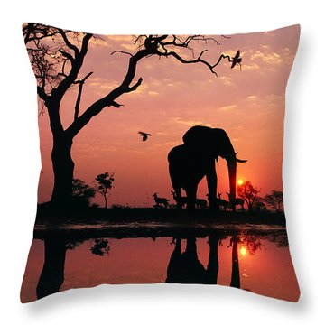 African Elephant At Dawn Throw Pillow by Frans Lanting MINT Images