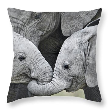 African Elephant Calves Loxodonta Throw Pillow