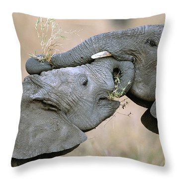 African Elephant Calves Playing  Throw Pillow