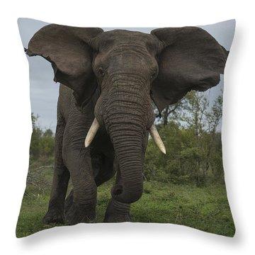 African Elephant Charging Sabi-sands Throw Pillow