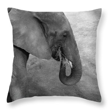 African Elephant Throw Pillow by Edward R Wisell