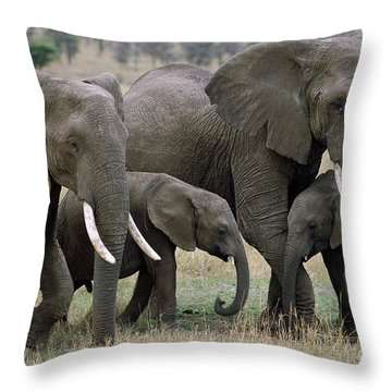 African Elephant Females And Calves Throw Pillow