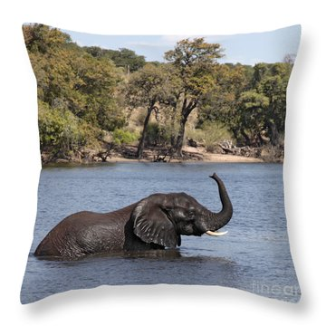 Throw Pillow featuring the photograph African Elephant In Chobe River  by Liz Leyden