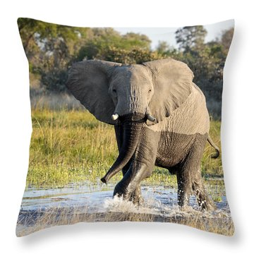 Throw Pillow featuring the photograph African Elephant Mock-charging by Liz Leyden