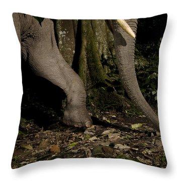 African Elephant Night Walk Kibale Np Throw Pillow