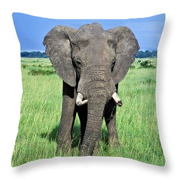 Throw Pillow featuring the photograph African Elephant by Tina Manley