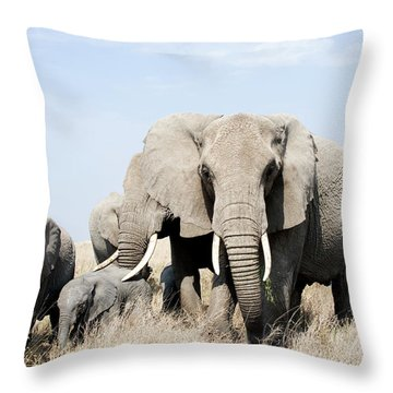 African Elephants In A Forest Throw Pillow