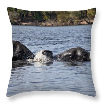 African Elephants Swimming In The Chobe River Botswana Throw Pillow by Liz Leyden