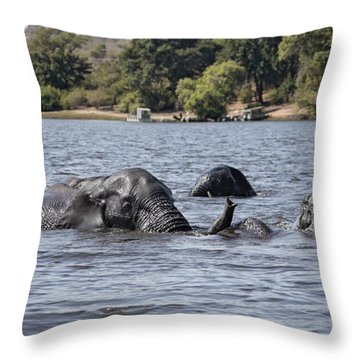 Throw Pillow featuring the photograph African Elephants Swimming In The Chobe River by Liz Leyden