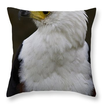 African Fish Eagle 4 Throw Pillow by Heiko Koehrer-Wagner