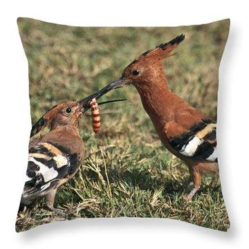 African Hoopoe Feeding Young Throw Pillow by Liz Leyden