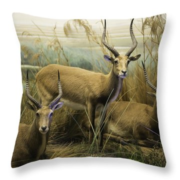 African Impalas Throw Pillow by Diego Re