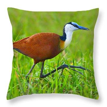 African Jacana Throw Pillow by Tony Beck