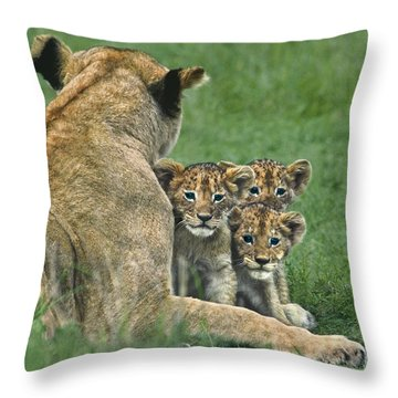 African Lion Cubs Study The Photographer Tanzania Throw Pillow