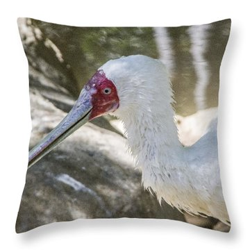 African Spoonbill Throw Pillow