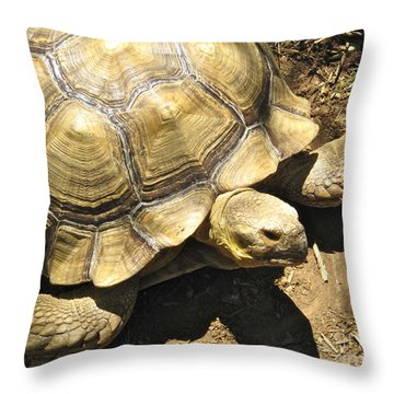 African Spurred Tortoise Throw Pillow by CML Brown