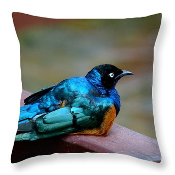 African Superb Starling Bird Rests On Wooden Beam Throw Pillow