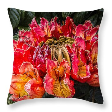 Throw Pillow featuring the digital art African Tulip Tree Flowers by Photographic Art by Russel Ray Photos