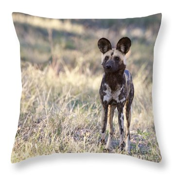 African Wild Dog  Lycaon Pictus Throw Pillow