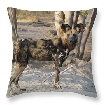 African Wild Dog Lycaon Pictus Standing Throw Pillow