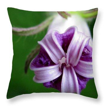 After Morning Glory Throw Pillow