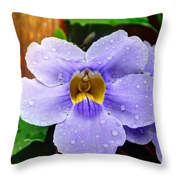 After The Rain Throw Pillow by Bob Hislop