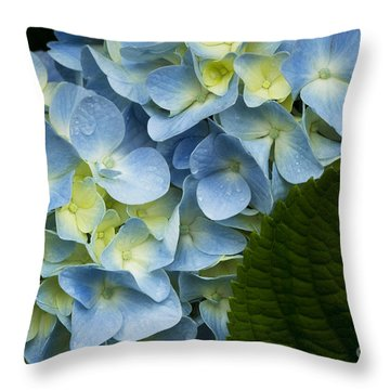 After The Rain Throw Pillow by Carrie Cranwill