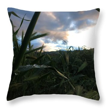 After The Rain Throw Pillow by Paul Foutz