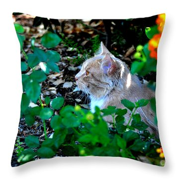 Throw Pillow featuring the photograph Afternoon Nap Interrupted by Susan Wiedmann