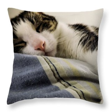 Throw Pillow featuring the photograph Afternoon Nap by Robyn King