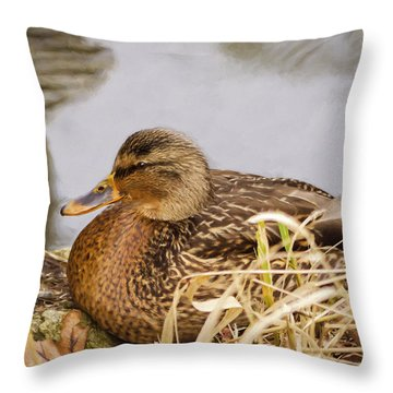 Throw Pillow featuring the photograph Afternoon Siesta by Jordan Blackstone