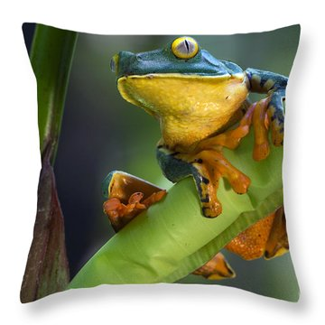 Agalychnis Calcarifer 4 Throw Pillow