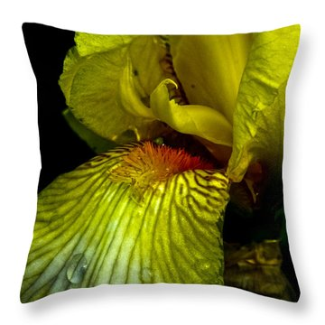 Aieris Throw Pillow